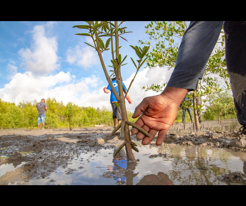 ©GCCA+ Mangrove Biodiversity Monitoring System in Suriname (Nickerie), Harvey Lisse