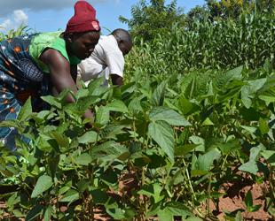 FAO, EU join forces to fund field schools for farmers